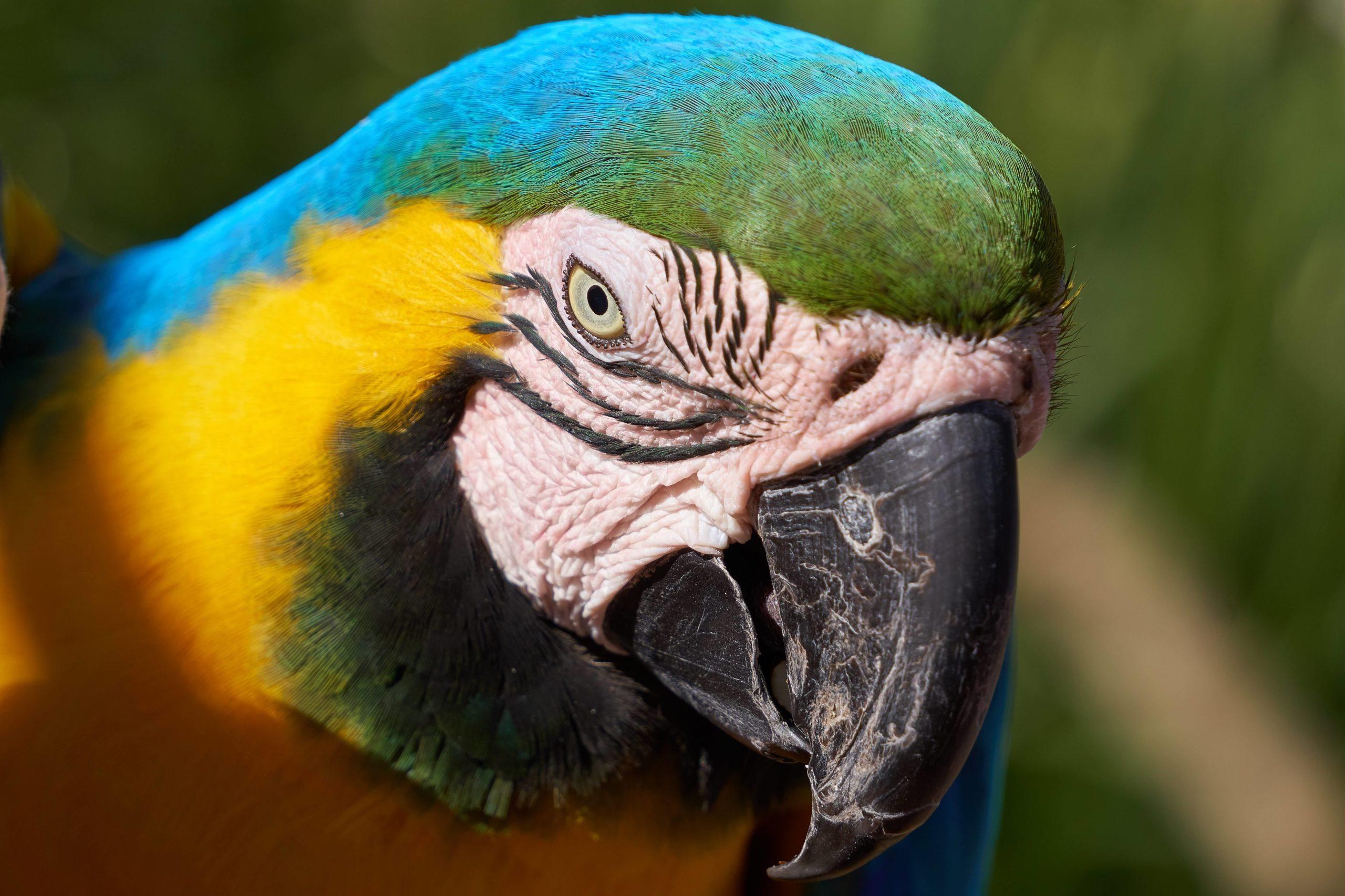 Maleny Macaw